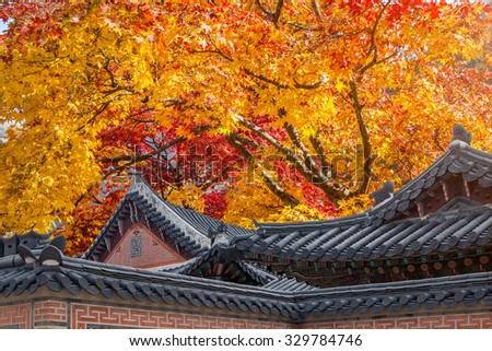 Roof of Gyeongbukgung and Maple tree in autumn in korea. - stock photo