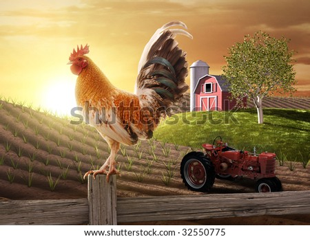 Rooster perched upon a farm fence post as the sun rises behind him - stock photo