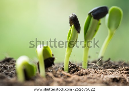 root seed on soil and light in morning green concept - stock photo