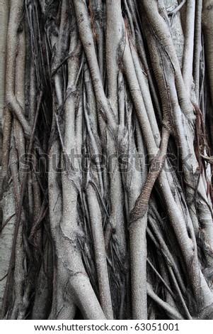 root tree - stock photo