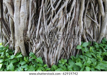 root wooden texture covered with some green leaves - stock photo