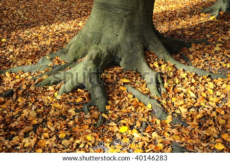 Roots - autumnal colors - leaves