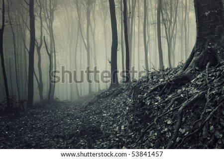 roots of a tree from a misty forest - stock photo