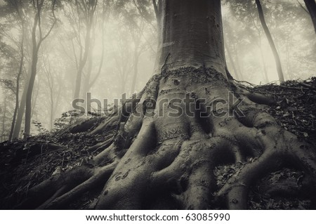 roots of an old tree in a dark misty forest - stock photo