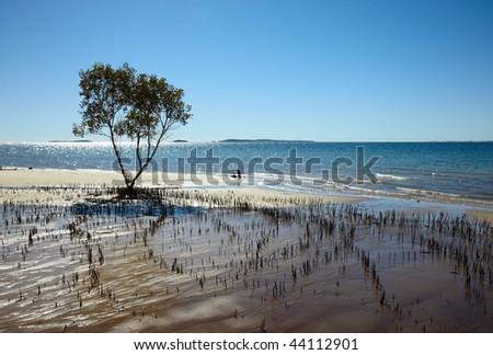 Roots of the mangrove tree at ocean coast - stock photo