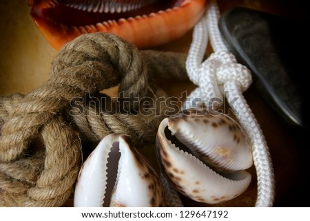 Rope knots and shells background.
