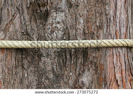 Rope tied on the tree - stock photo