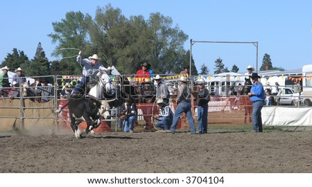 Roping A Steer - stock photo