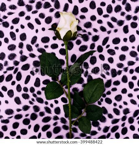 Rose and Animal prints. Minimalism fashion style. - stock photo