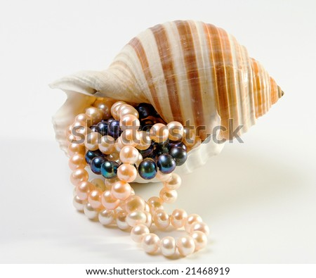 Rose and black pearls in the shell