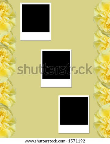Rose and blank photos - stock photo