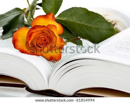rose and book - stock photo