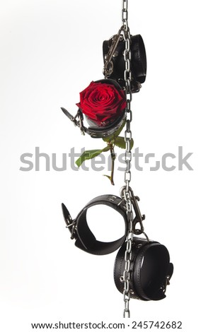 Rose and toys - stock photo