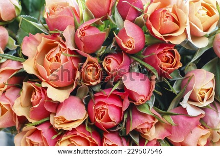 Rose background - stock photo