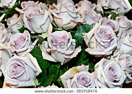 Rose Bouquet - stock photo