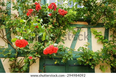 Rose bush overgrowing half timbered house. French countryside. - stock photo
