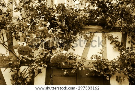 Rose bush overgrowing half timbered house. French countryside. Aged photo. Sepia. A game of light and shadow. - stock photo