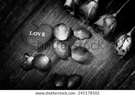 rose flower in black and white - stock photo