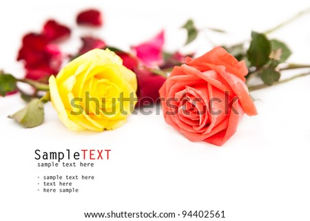 Rose flower isolate on white - stock photo