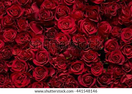 Rose flowers - stock photo