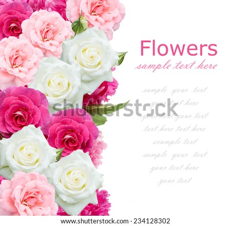 Rose flowers background isolated on white with sample text - stock photo