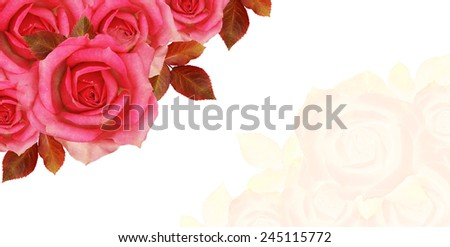 Rose flowers corner on white background