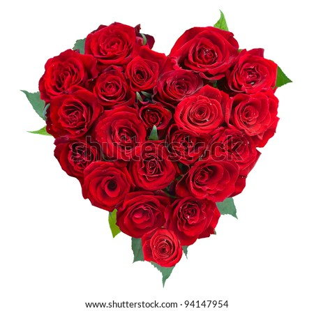 love rose flower stock images, royaltyfree images  vectors, Beautiful flower