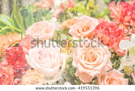 Rose flowers in the drops rain under glass with spring soft blur background.