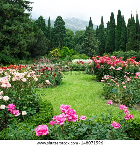 Rose Garden Stock Images Royalty Free Images Vectors