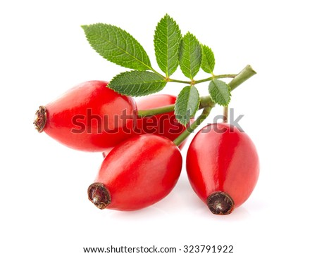 Rose hip with leaves - stock photo