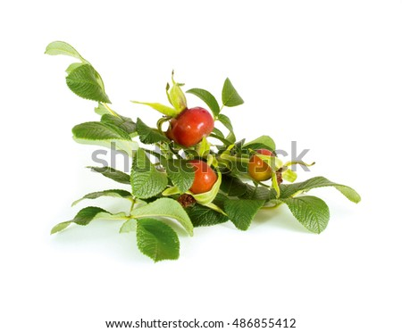 Rose hips (Rosa canina) fruits isolated on white background