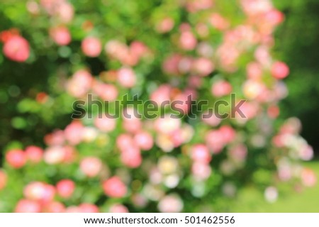 Rose of Beauty - Garden and Flower Backgrounds - Blur of Color Spots