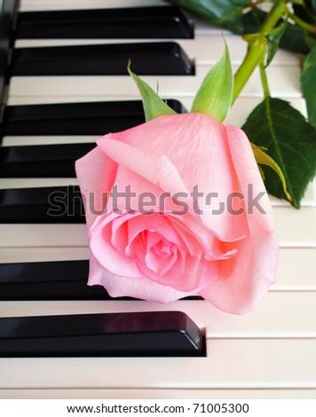 Rose on piano keys - stock photo