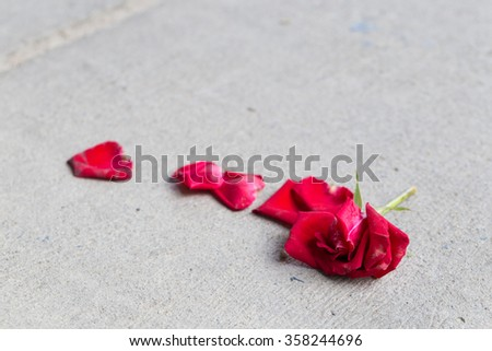 Rose on the floor Feeling isolated and lonely Red rose that fell on the floor. - stock photo