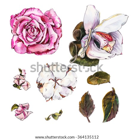 Rose, Orchid, cotton and other flowers and leaves. Elements for design isolated on white background. Pencil drawing and watercolor. - stock photo