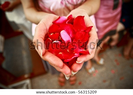 Rose petal in the hand.