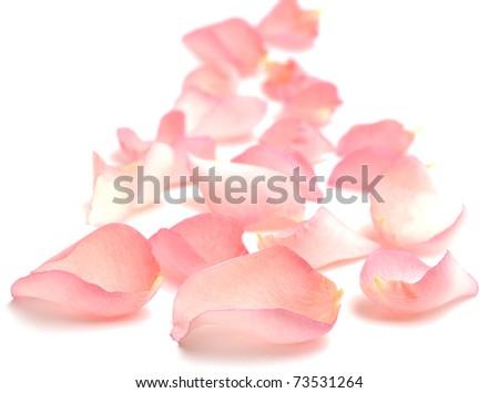 Rose Petals Border - stock photo