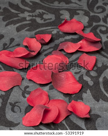 rose petals one a black and grey floral background - stock photo