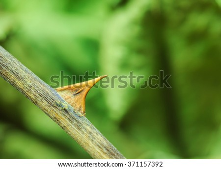 Rose thorn green background - stock photo