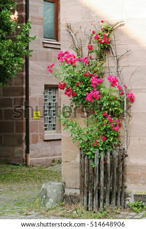 Rose tree at the building corner in Germany