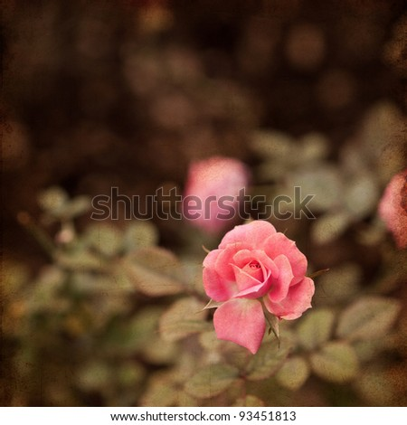 rose vintage background