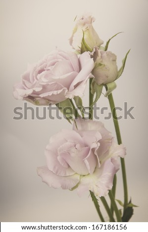 Rose Vintage Flowers - stock photo
