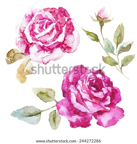 rose, watercolor, element, flower - stock photo