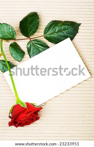 Rose with stationery - stock photo