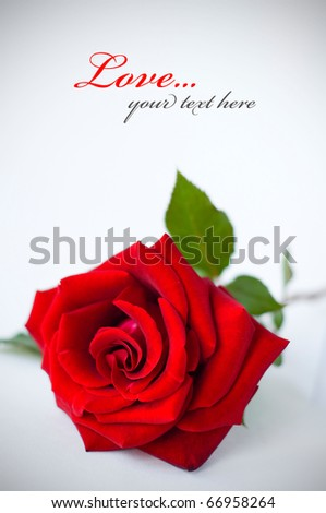 Rose with vignette effect text - stock photo