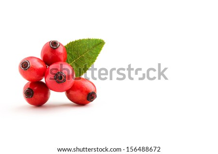 Rosehip berries with leaves isolated on white background. - stock photo
