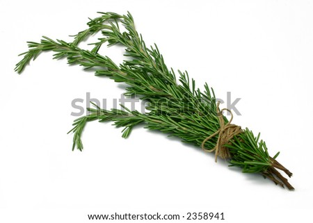 Rosemary (herb) tied in a bunch with twine, isolated on white