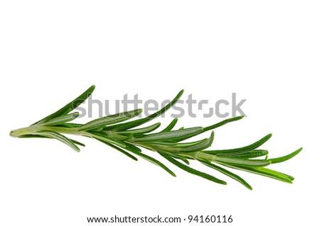 Rosemary isolated - stock photo