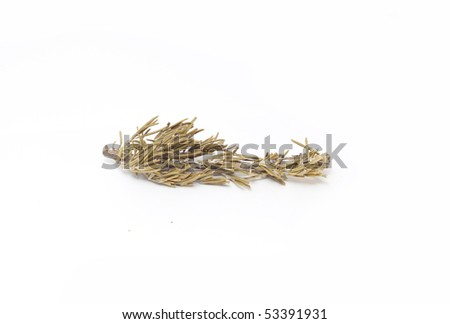 rosemary isolated in white - stock photo