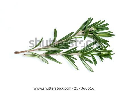 Rosemary isolated on white - stock photo